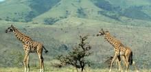 Découvrir le paradis naturel de Botswana avec Safarivo