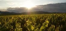Des vins à découvrir par le biais de vente-de-vin.com